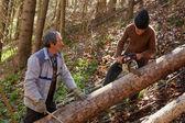 Altos leñadores cortando árboles — Foto de Stock