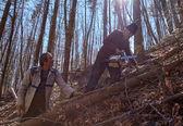 Senior lumberjacks cutting trees — Stock Photo