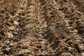 Potatoes on rows into plowed soil — Stock Photo