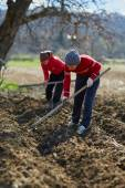 People sowing potato — Stock Photo