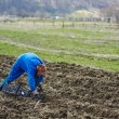 Woman sowing potatoes — Stock Photo #70660527