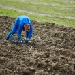 Woman sowing potatoes — Stock Photo #70660537