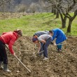 Family of peasants cultivating potatoes — Stock Photo #70660637