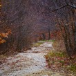 Small river flowing through beech forest — Stock Photo #70660763