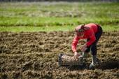 Peasant woman cultivating potatoes — Stock Photo
