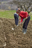 Family of peasants cultivating potatoes — Stock Photo