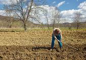 Senior woman covering potatoes — Stock Photo