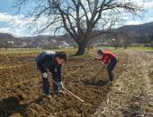 Family of peasants sowing potatoes — Foto de Stock