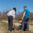 Grandson, father and grandfather planting a plum tree in an orch — Stock Photo #71294949