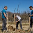 Three generations family planting a tree together — Stock Photo #71294979