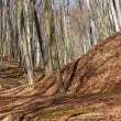 Landscape with beech forest on springtime — Stock Photo #71295131