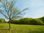 Landscape with a young tree on a meadow — Stock Photo