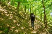 Boy with backpack hiking — Stock Photo