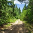 Country road through pine forest — Stock Photo #79205704
