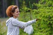 Woman picking fir buds — Stock Photo