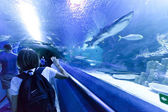 Group of tourists visiting aquarium — Stockfoto