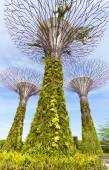 Supertree Grove at Gardens by the Bay — Stock Photo