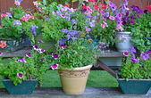 Colorful summer flower planters — Foto Stock