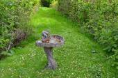 Green spring garden and birdbath — Stock Photo