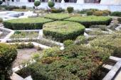 Ornamental Terrace Garden — Stock Photo