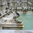 Pigeons are drinking water from the fountain in Siena. Detail of — Stock Photo #51804709