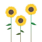 Sunflower's silhouettes, isolated on white — Stock Vector