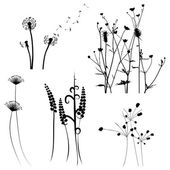 Collection for designers, meadow in summertime, plant vector set — Stock Vector