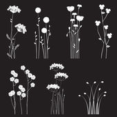Blooming wild flowers separated on a black background — Stock Vector