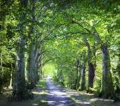Lane in forest — Stock Photo