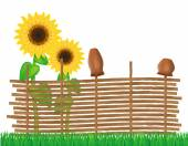 Wicker fence of twigs with sunflowers vector illustration — Stock Vector