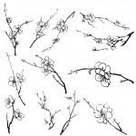 Plum blossom branches — Stock Photo