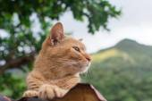 Ginger tabby cat lying on the roof. — Stock Photo