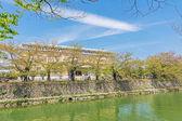 Emerald green cherry trees and Kyoto Municipal Museum — Stock Photo