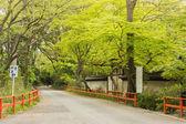 Boulevard near Shimogamo Shrine — Stock Photo