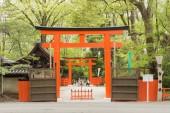 The torii of Tadasu No Mori(Shimogamo Shrine)  — Stock Photo