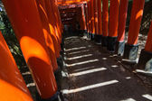 Light and shadow in thousands of Torii  — Stock Photo