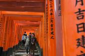 Tourists walk in thousands of Torii — Stock Photo