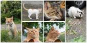 Collection of cats — Stock Photo
