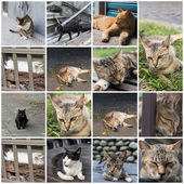Gatto alla finestra — Foto Stock