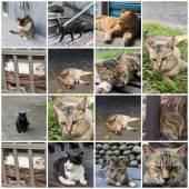 Katze am fenster — Stockfoto