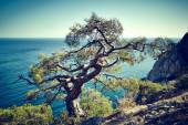 Tree and sea at sunset. Crimea landscape — Stock Photo