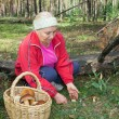 Woman collect mushrooms in forest — Stock Photo #52769841