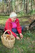Woman collect mushrooms in forest — Stock Photo