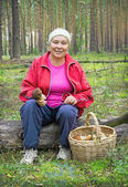 Woman collect mushrooms in a pine forest — Stock Photo