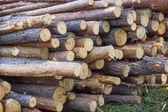 Pile of felled tree trunks — Stock Photo
