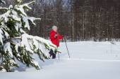 Woman,  europeans, walks in the winter forest — Stock Photo