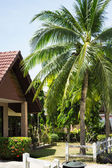 Coconut palms in the Thai village — Stock Photo