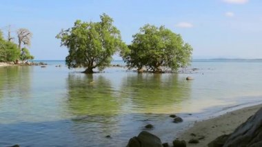 Mangrove in the area of low tide — Stock Video