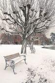 Winter scenery — 图库照片