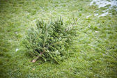 Used christmas tree — Stock Photo